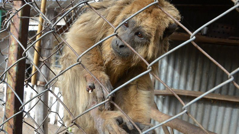 Buscan traslado el refugio Luan y sus 200 animales