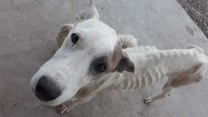Rescataron a dos perros completamente desnutridos tras una denuncia por maltrato animal