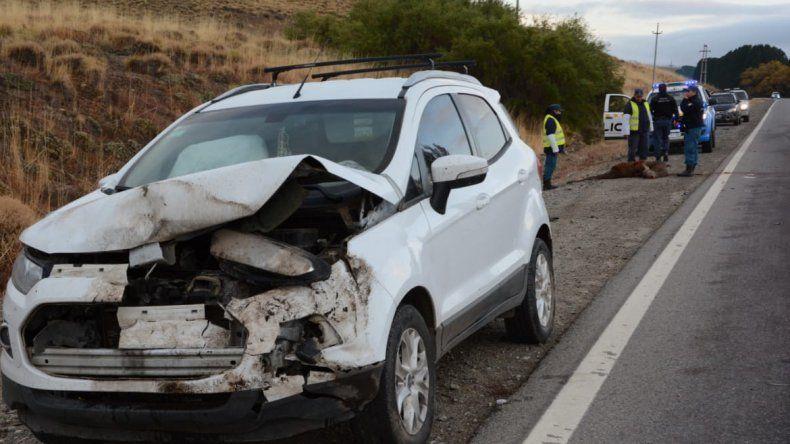 Un ciervo fue atropellado por tres vehículos en la Ruta 40 a la altura de Junín de los Andes