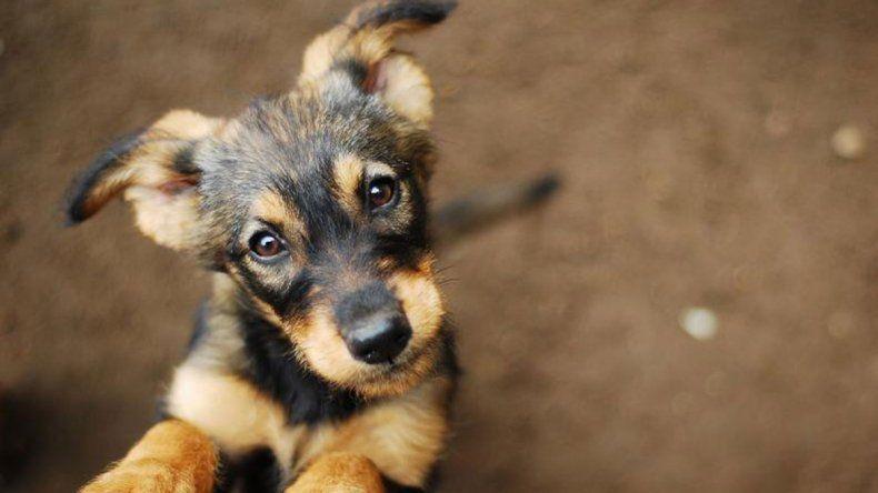 Todavía quedan 50 perros a la espera de una adopción