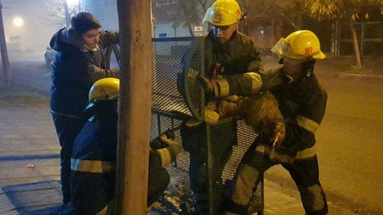 Bomberos rescataron a un perrito atorado en un cesto de basura