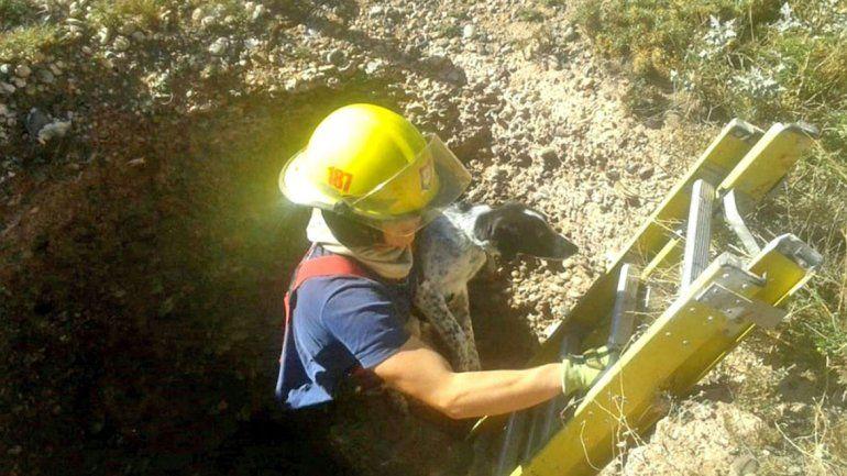Bomberos siguen al día con rescates de mascotas