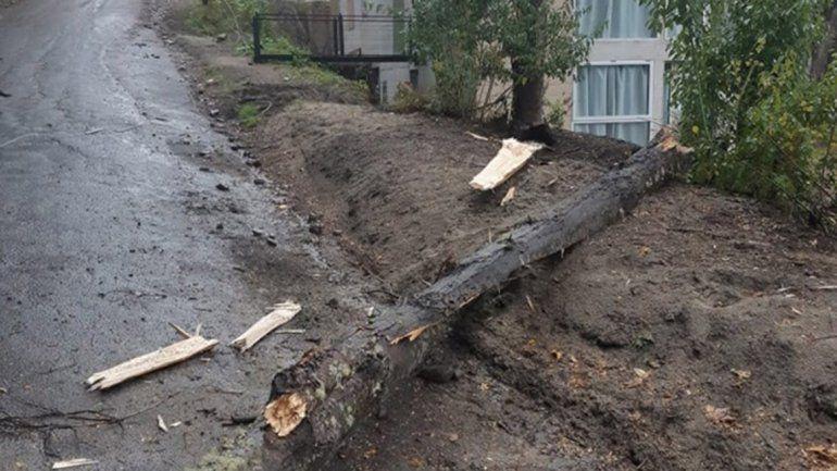 El temporal provocó caída de árboles y cortes de luz