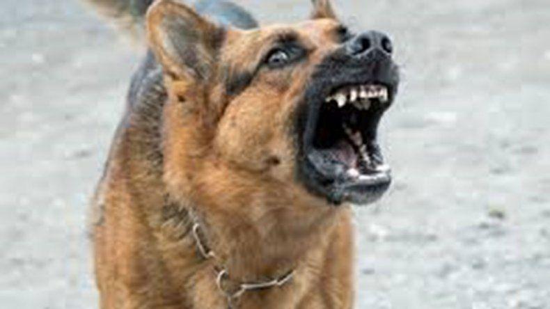 Su perro atacó a una mujer y debe pagarle $50.000