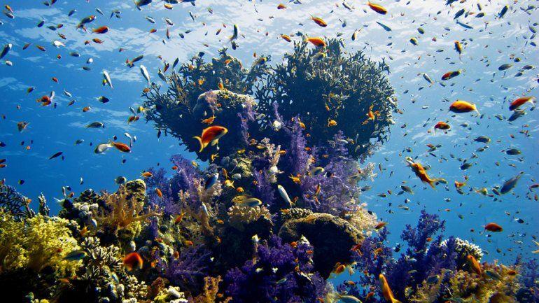 Egipto: el turismo ataca a los corales en el mar Rojo