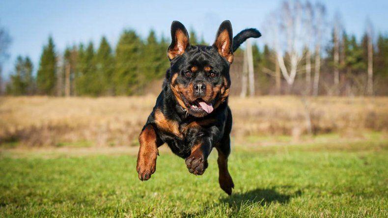 Los perros oyen su nombre en el ruido