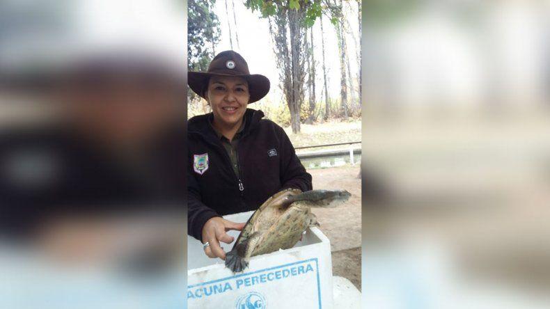 Encontraron una tortuga exótica para la región en el Río Limay