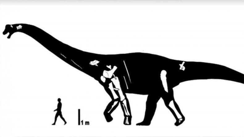 Neuquén suma un nuevo dinosaurio de talla gigante