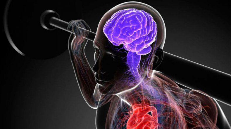La actividad física regular incide en la memoria
