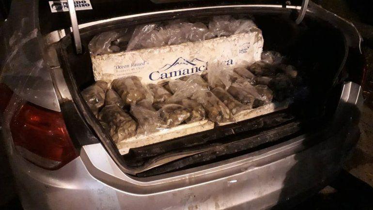 Decomisaron más de 300 kilos de ostras que venían a Neuquén