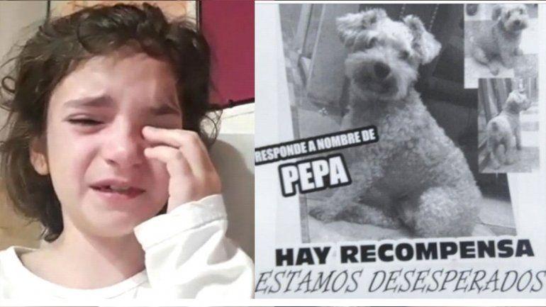 A puro llanto, una nena grabó un tierno mensaje para que la ayuden a encontrar a su perrita