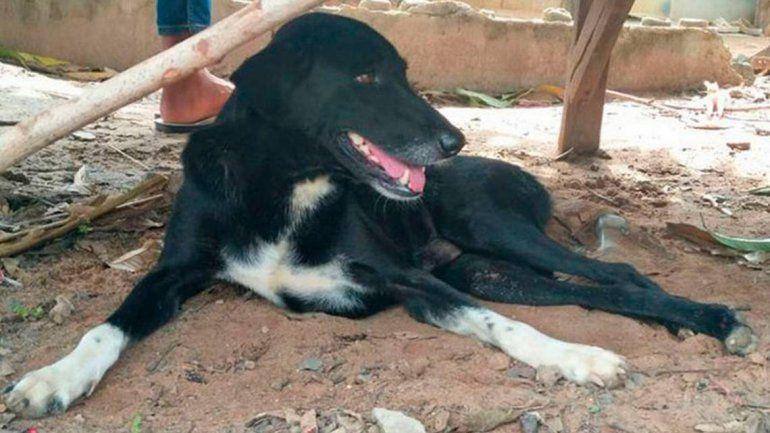 Tailandia: perro discapacitado salvó a un bebé