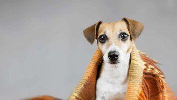 como proteger a tu perro durante el frio