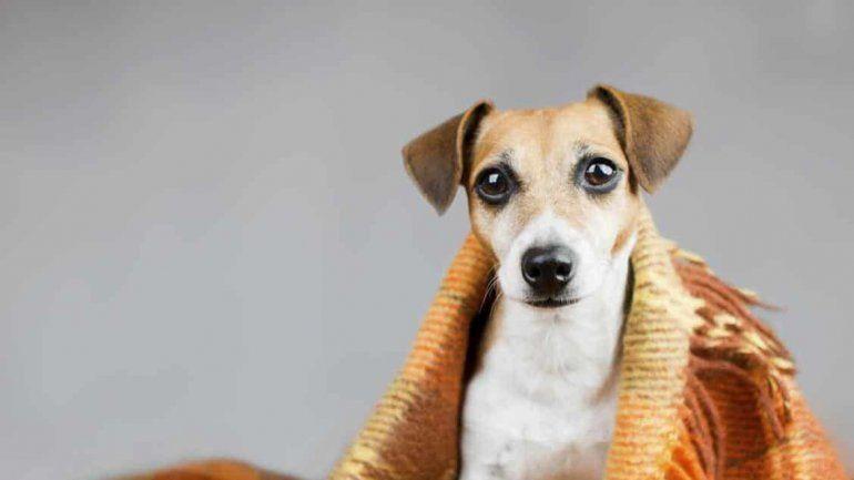 Cómo proteger a tu perro durante el frío