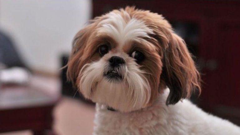Insólito: hizo matar a su perra para que la sepulten con ella