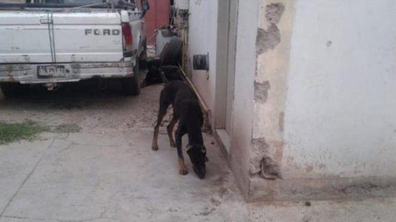 San Lorenzo Norte: lo acusaron por tener a sus dos perros desnutridos