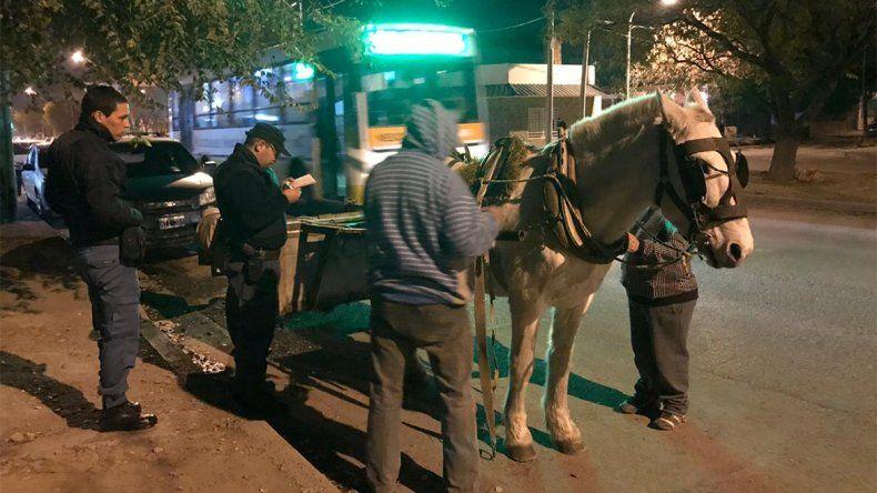 Con un improvisado operativo, rescataron a un caballo que era maltratado