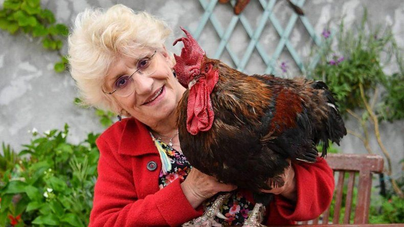 Francia: aplazan el insólito juicio a un gallo que canta temprano