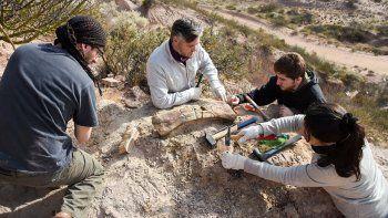 estudiantes hallaron restos de un dino en el campus