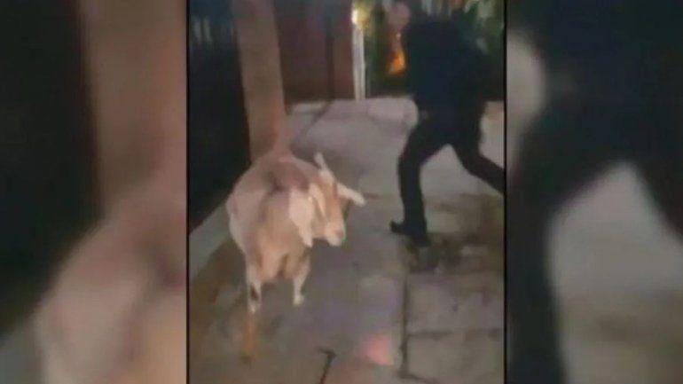 Un condenado con prisión domiciliaria sale a pasear cabras