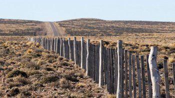 animales sueltos: refuerzan los alambrados en rutas regionales