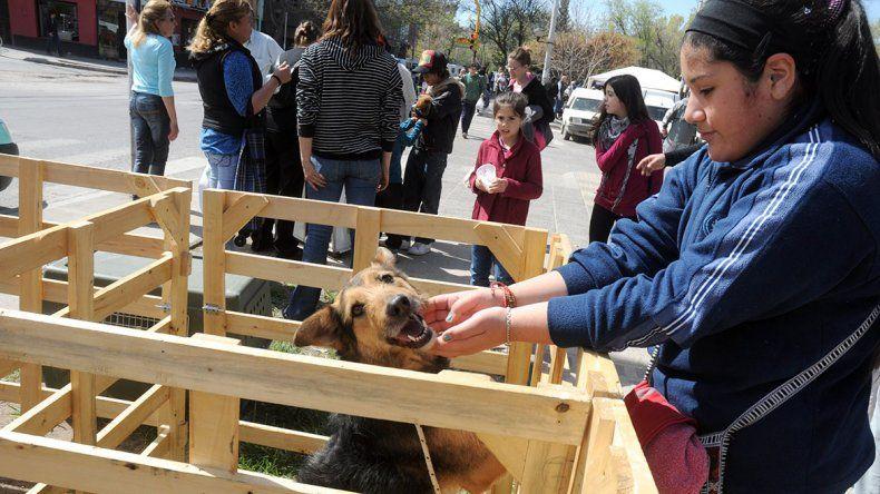 Gracias al book digital de la Muni, más perros tienen casa