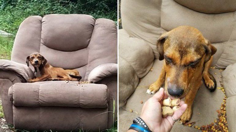 La triste historia de un cachorrito junto a un sillón