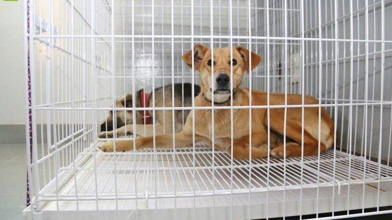 A Nueva España llega la Muni para castrar más perros