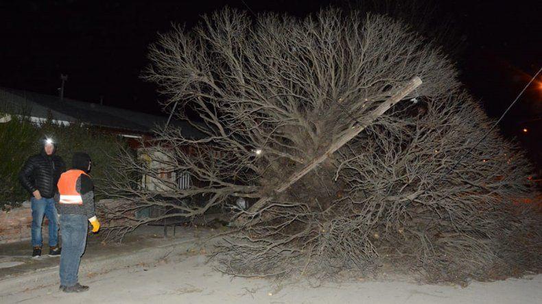Fuertes ráfagas de viento volaron techos y árboles en Junín