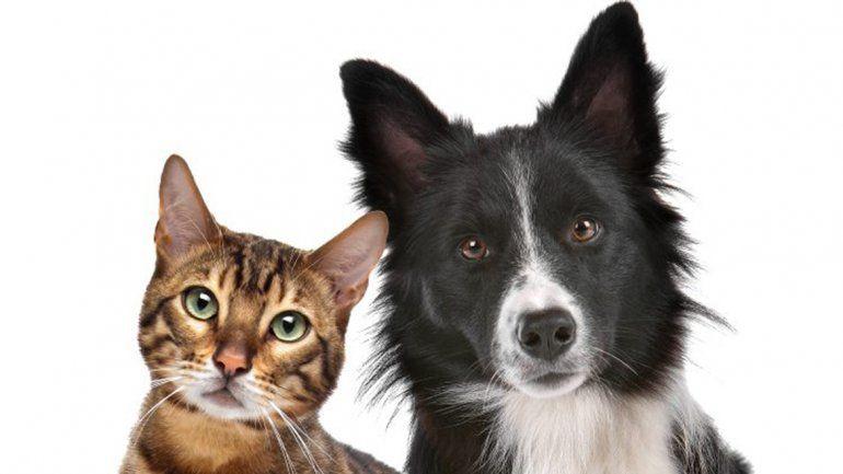 ¿Cómo afectará el eclipse a las mascotas y qué recaudos hay que tomar?