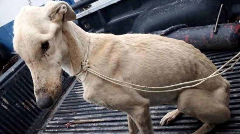 Rescataron a una perra desnutrida en Parque Industrial