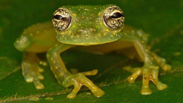 Hallaron especies que se creían extintas en una selva hondureña