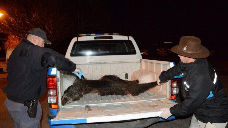 Detuvieron a un guardaparque por caza furtiva
