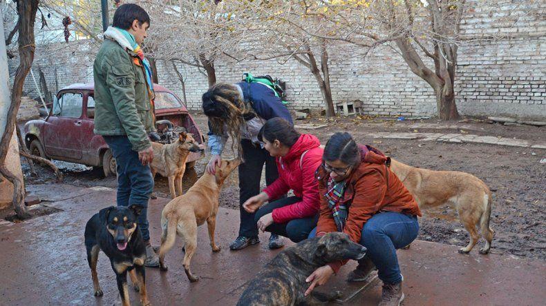 Centenario: voluntarios atienden a los 45 perros del jubilado fallecido