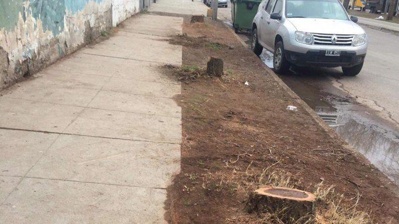 Menos sombra en la Olascoaga: talaron 15 árboles y lo califican como un delito ambiental