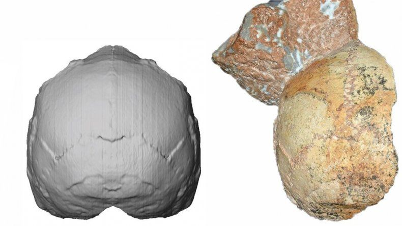 Descubrieron el fósil humano más antiguo fuera de África