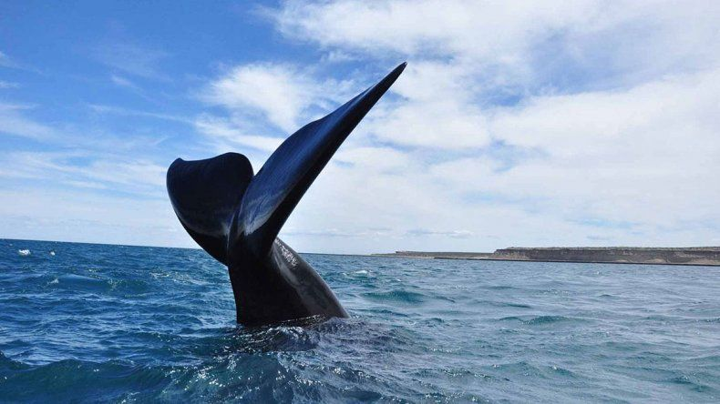 Premian al avistaje de ballenas en la Península Valdés