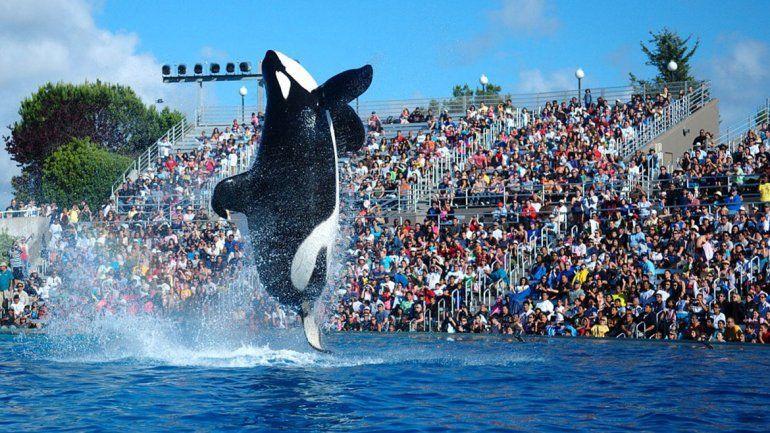 Drogan a ballenas de acuario para dar espectáculo