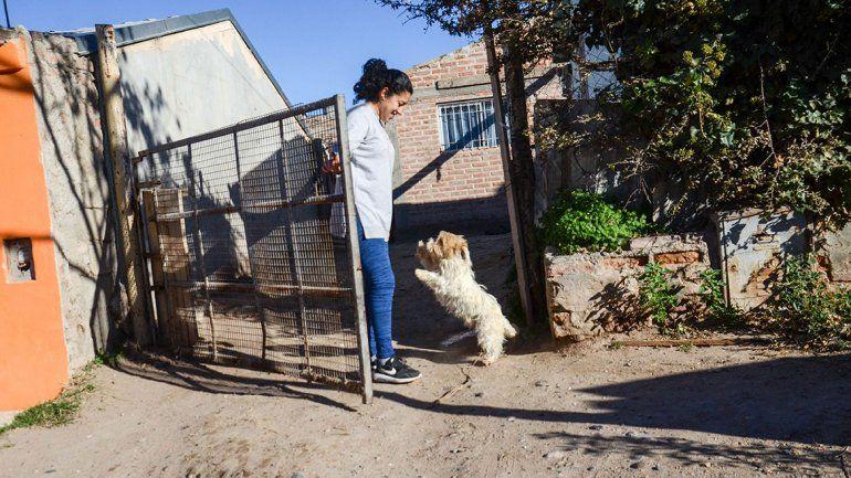No pueden frenar las matanzas de perros con veneno
