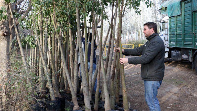 Plantarán 7000 árboles más en la capital neuquina