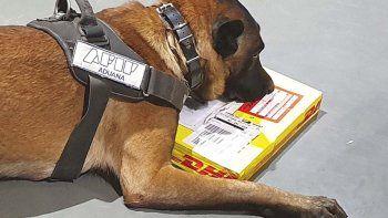 encuentran droga escondida en un envio postal