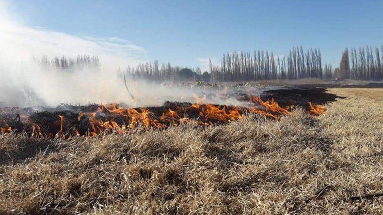 Alerta en Centenario: un pirómano tiene a maltraer a los chacareros y a los bomberos