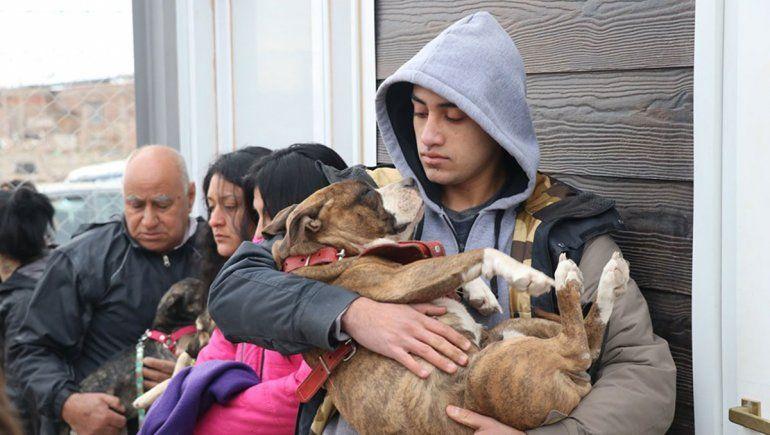 Centenario ya tiene un plan masivo para castrar perros