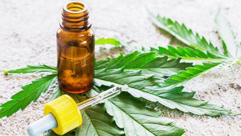 El cannabis para uso medicinal va por otro debate en Neuquén