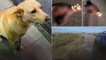 ato a un perro a su coche y lo arrastro hasta matarlo
