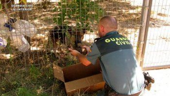 rescataron a seis cachorritos que habian sido enterrados vivos