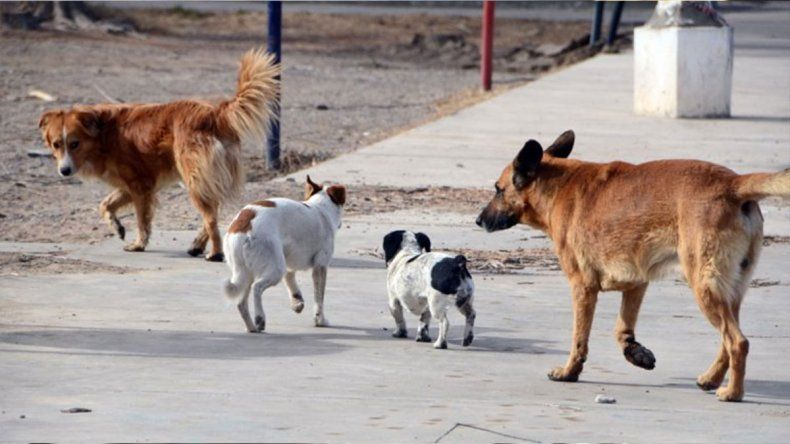 En 2019 se registraron 2000 animales sueltos menos en las calles neuquinas