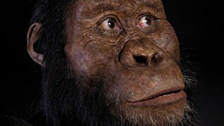 Hallan fósil que revela la cara del antepasado de Lucy