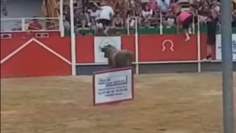 Un toro saltó las tribunas e hirió a 17 personas