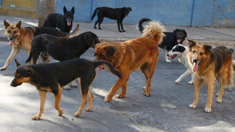 Los perros de un vecino matan a un nene de 2 años
